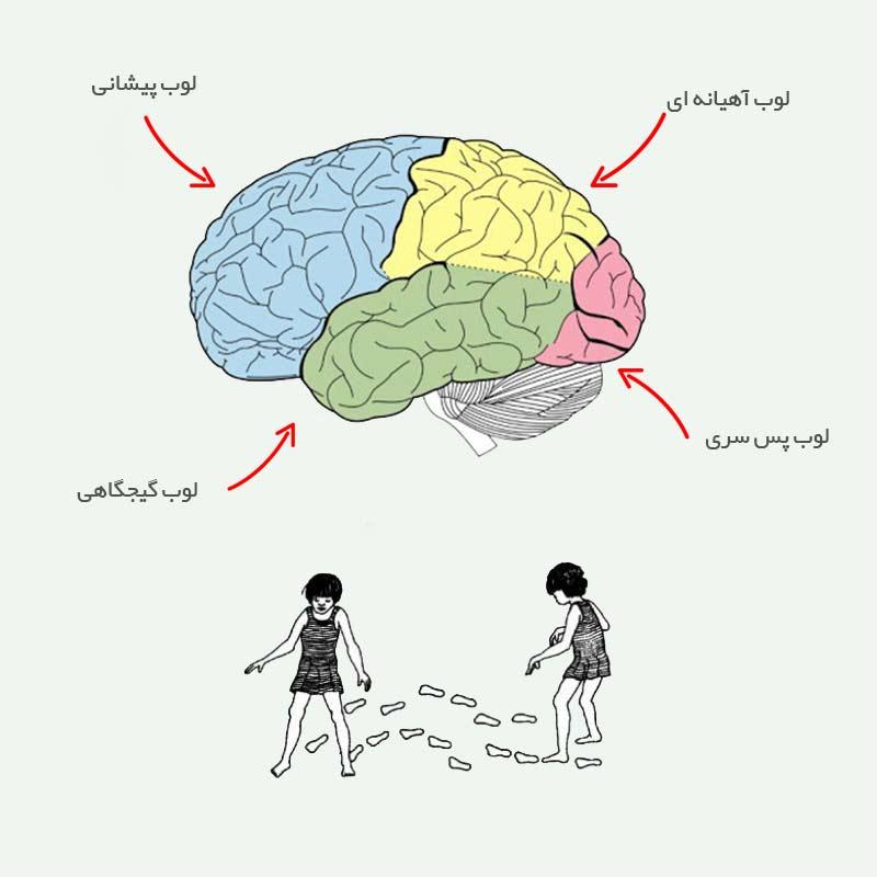 لوب های مخ