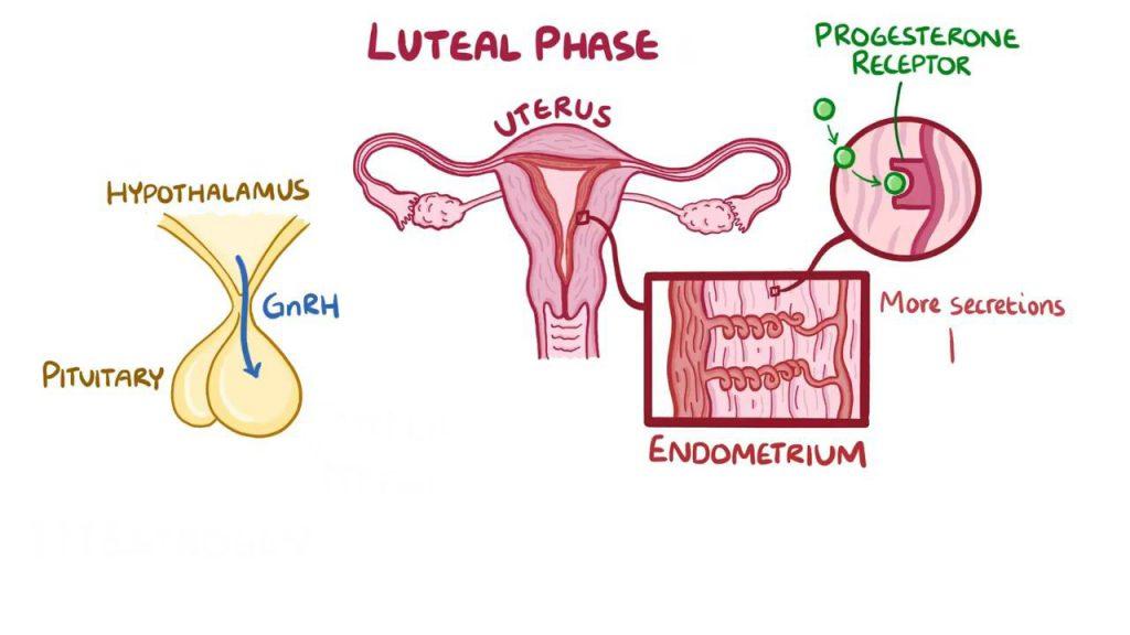 استروژن و پروژسترون
