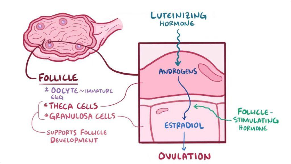 Sex cord gonadal stromal tumor
